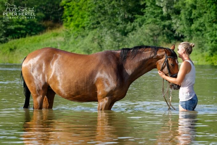 pferd-outdoor-bayerisches-warmblut-reiterin-wasser