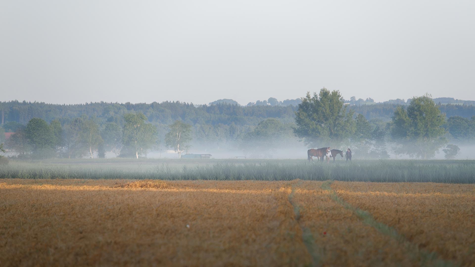 pferdefotografie-in-der-natur-wmstallweilheim-morgengrauen-hd