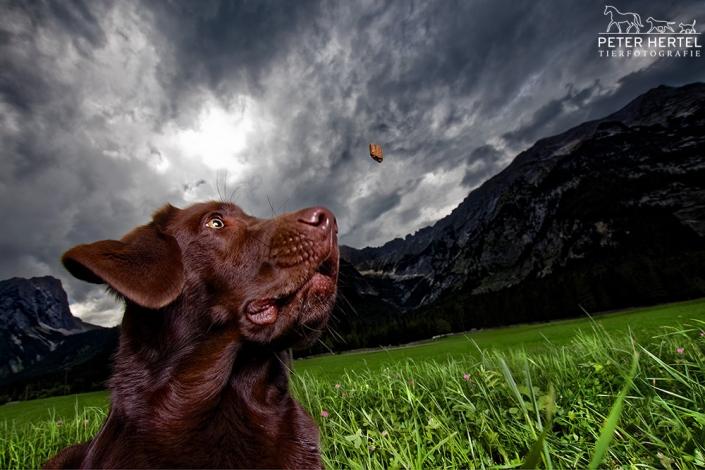 hund-outdoor-labrador-lemmy-berge-wurf-oben