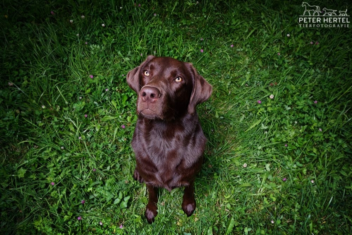 hund-outdoor-labrador-lemmy-gruen-ufo