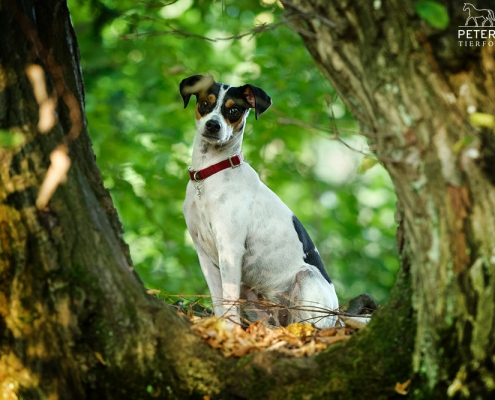 hund-outdoor-bodeguero-baum-emmy