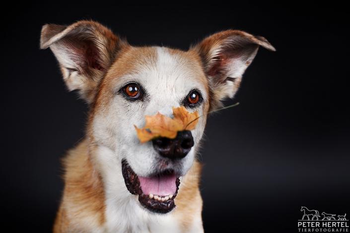 hundefotografie-im-studio-puck