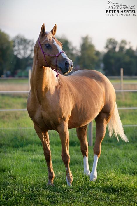 pferd-outdoor-koppel