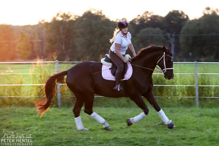 pferd-outdoor-reiterin-koppel