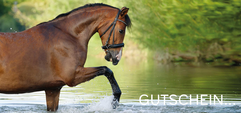 pferd-outdoor-gutschein