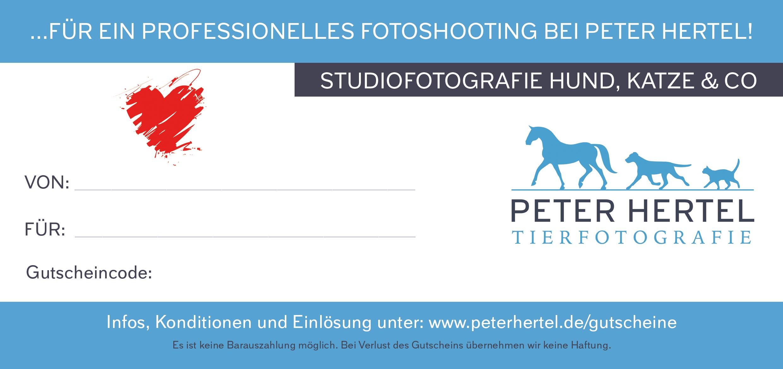 hund-katze-co-studio-rueckseite
