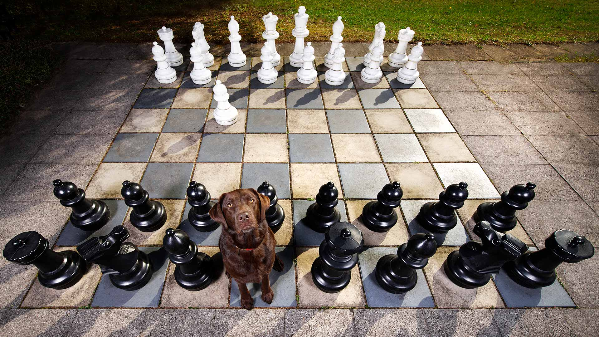 hund-outdoor-labrador-lemmy-schach-spezial