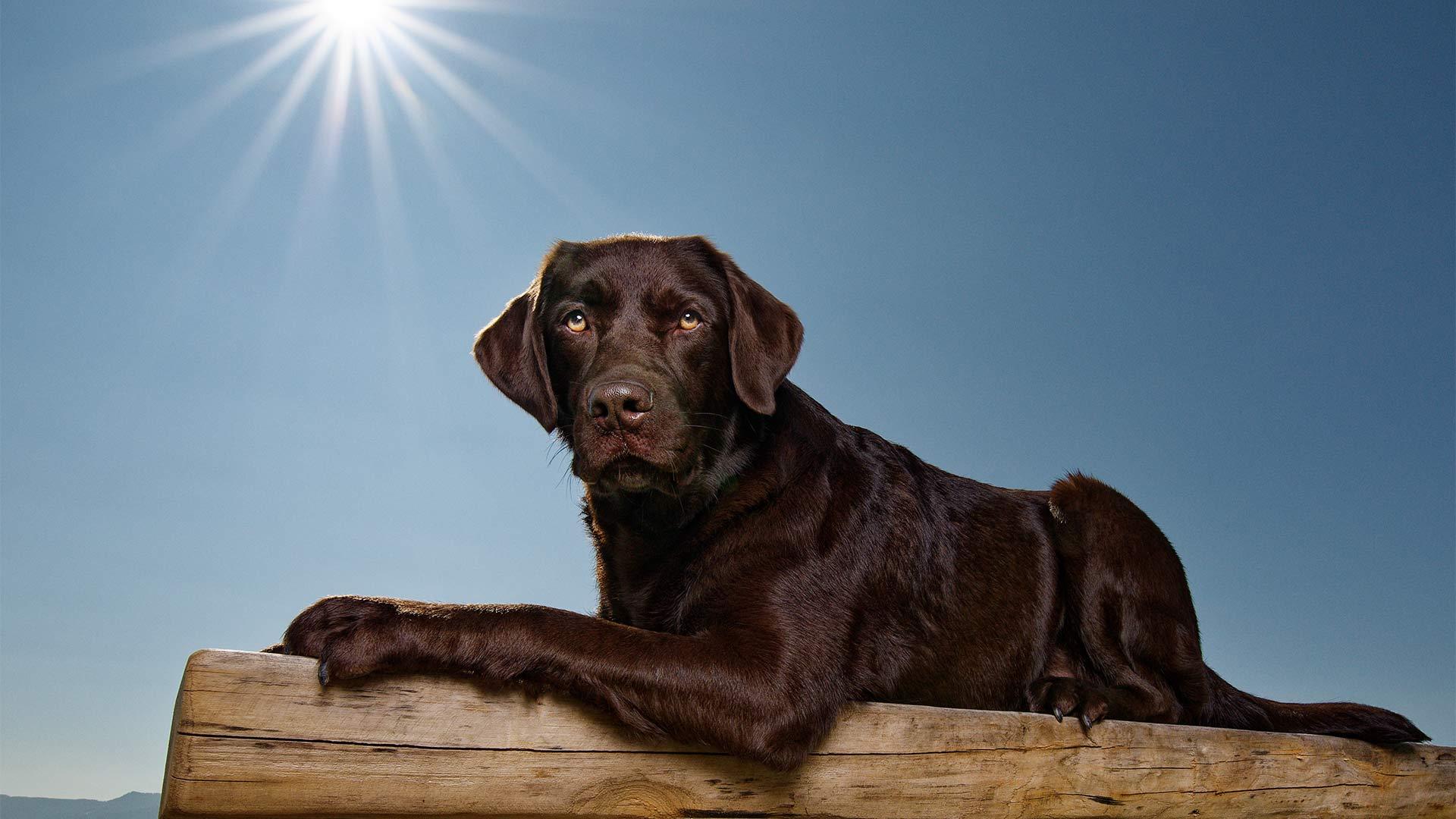 hund-outdoor-labrador-lemmy-spezial-bank