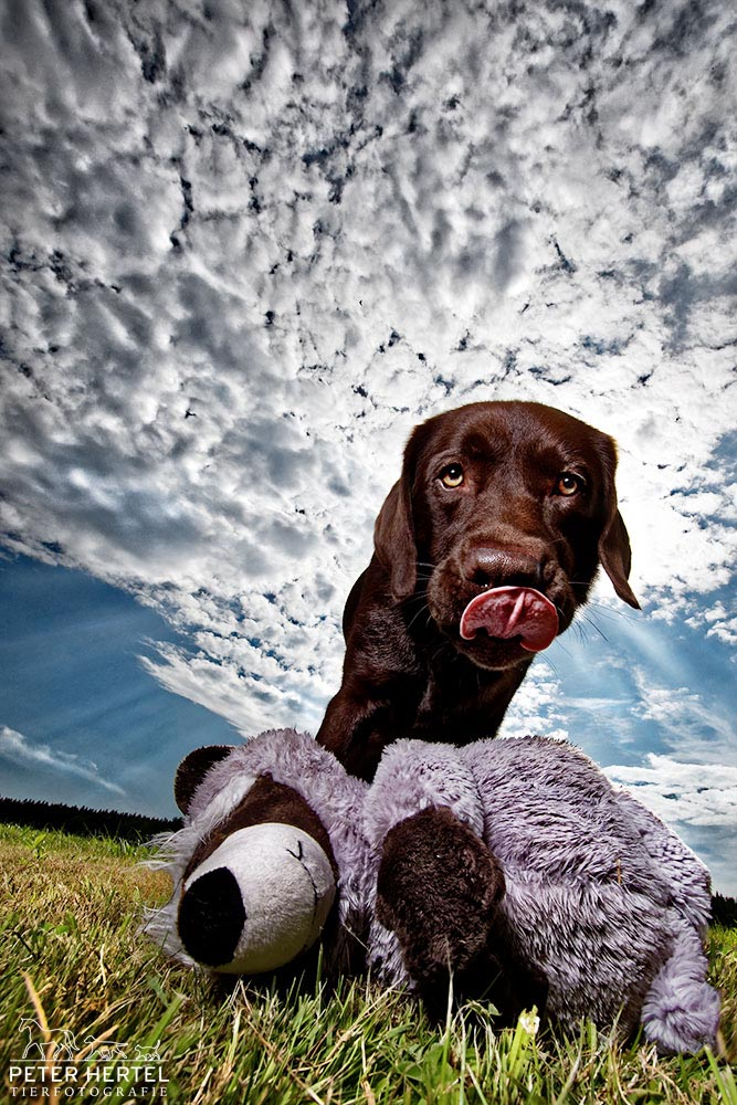 Outdoor Hund