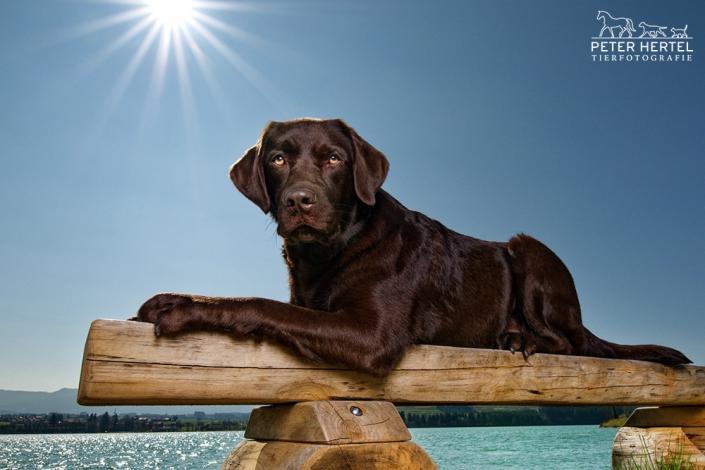 hund-outdoor-labrador-lemmy-spezial