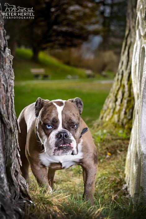 hund-outdoor-oeb-shakira-spezial