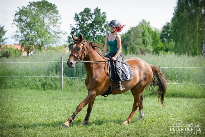 pferd-outdoor-fraenklinbaelle9