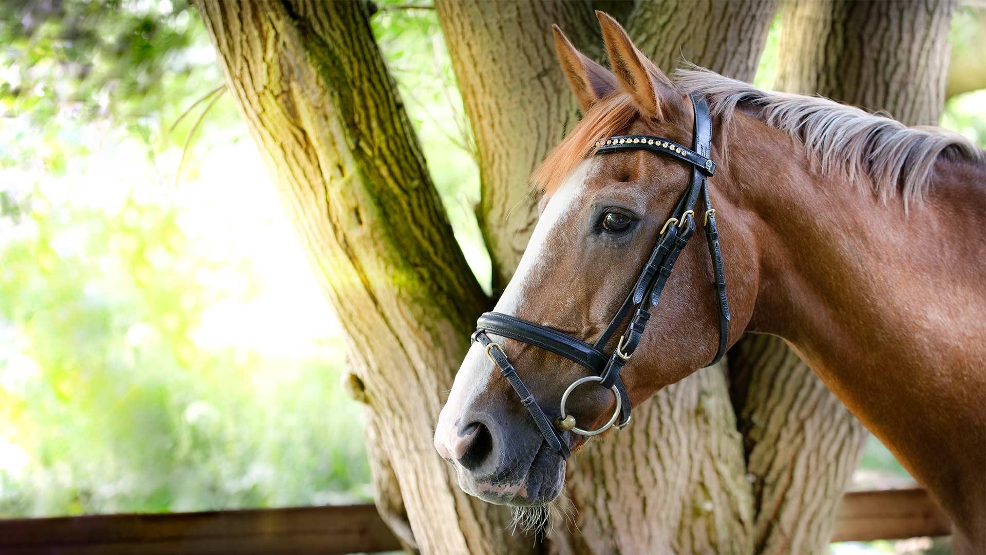 pferd-outdoor-hannoveraner-feline-start